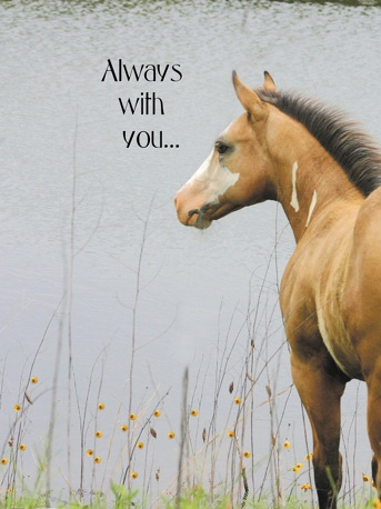 Greeting Cards Equiworld Ltd Specialist Equestrian